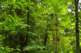 生きている森のフリー写真素材