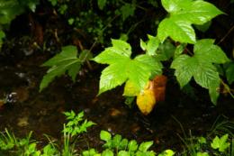 雨に濡れた葉っぱの無料写真素材