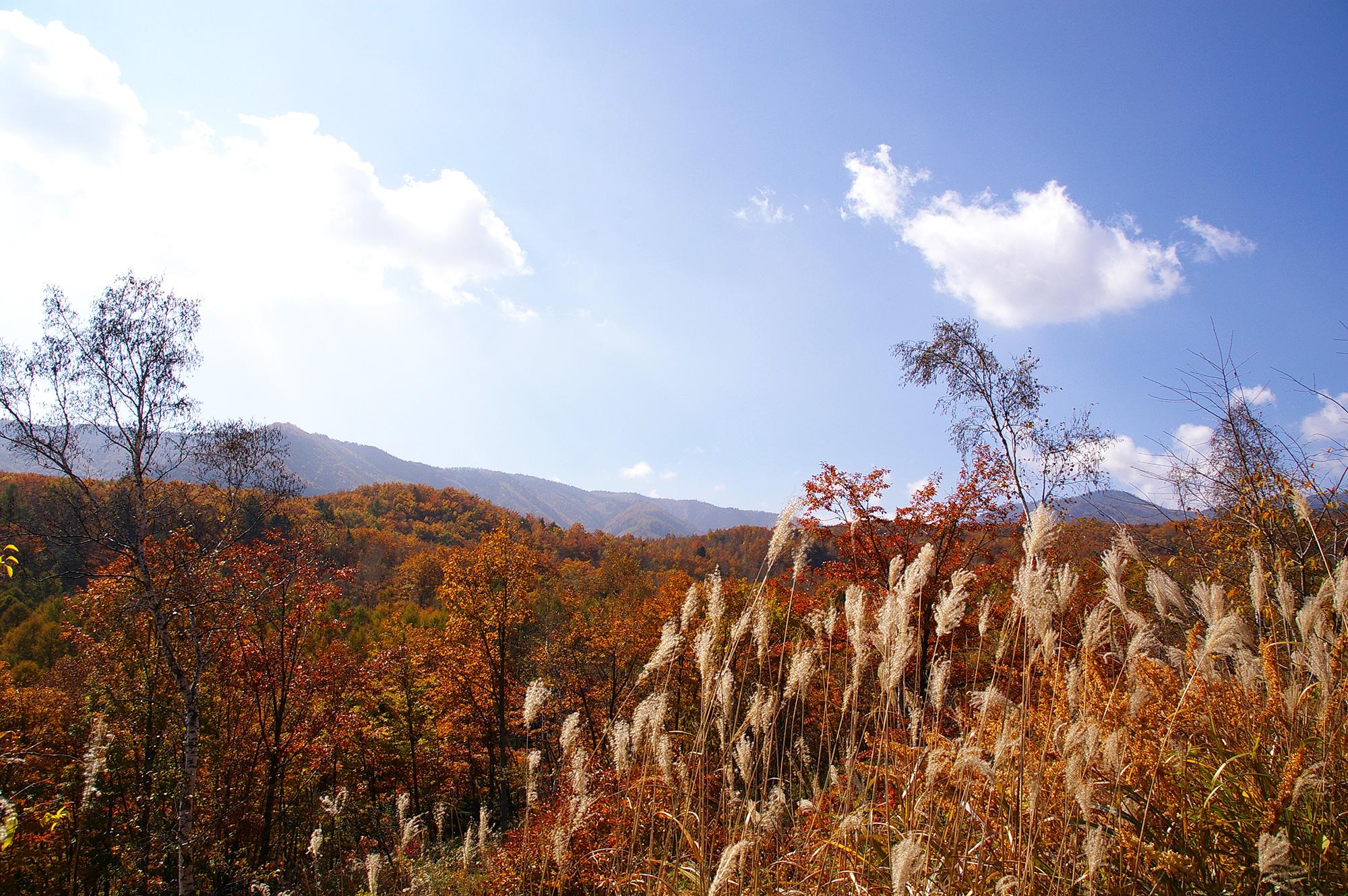 秋色風景の写真のフリー素材
