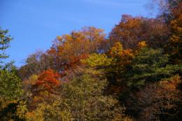 森の紅葉の写真のフリー素材