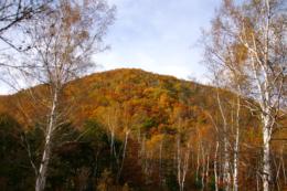 紅葉した小さな山