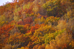 鮮やかな紅葉のフリー写真素材