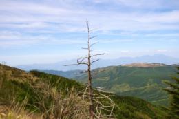 枯れ木と山々