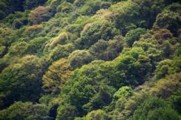 山の斜面の森のフリー写真素材
