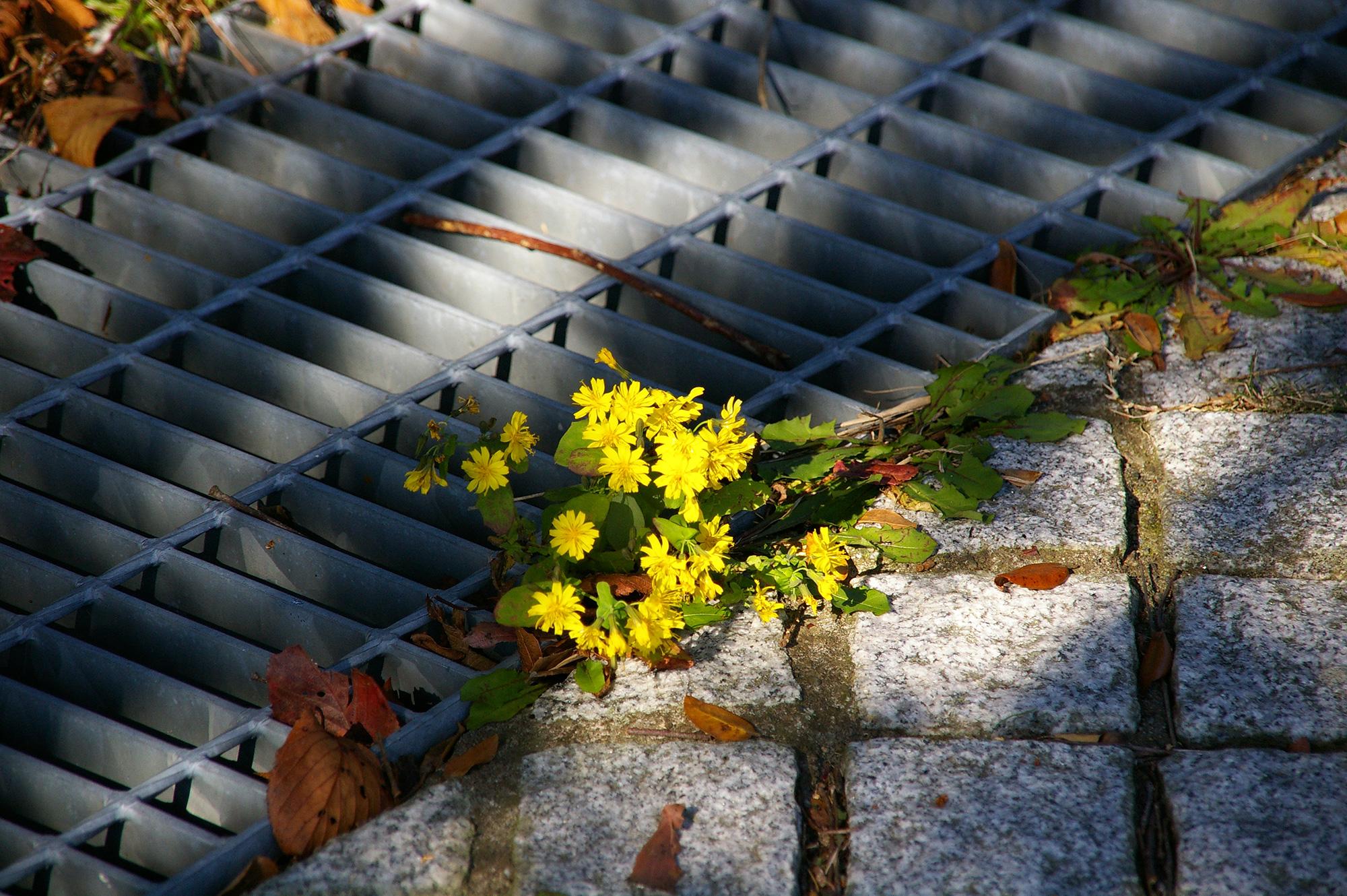 道端の花の写真の無料素材