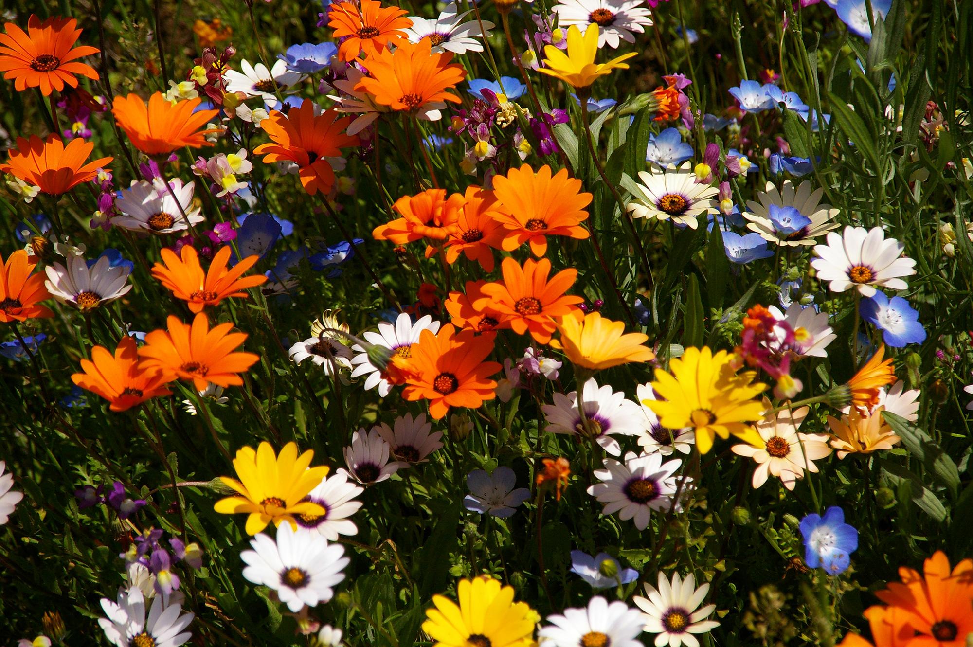たくさんのカラフルな花の写真の無料素材