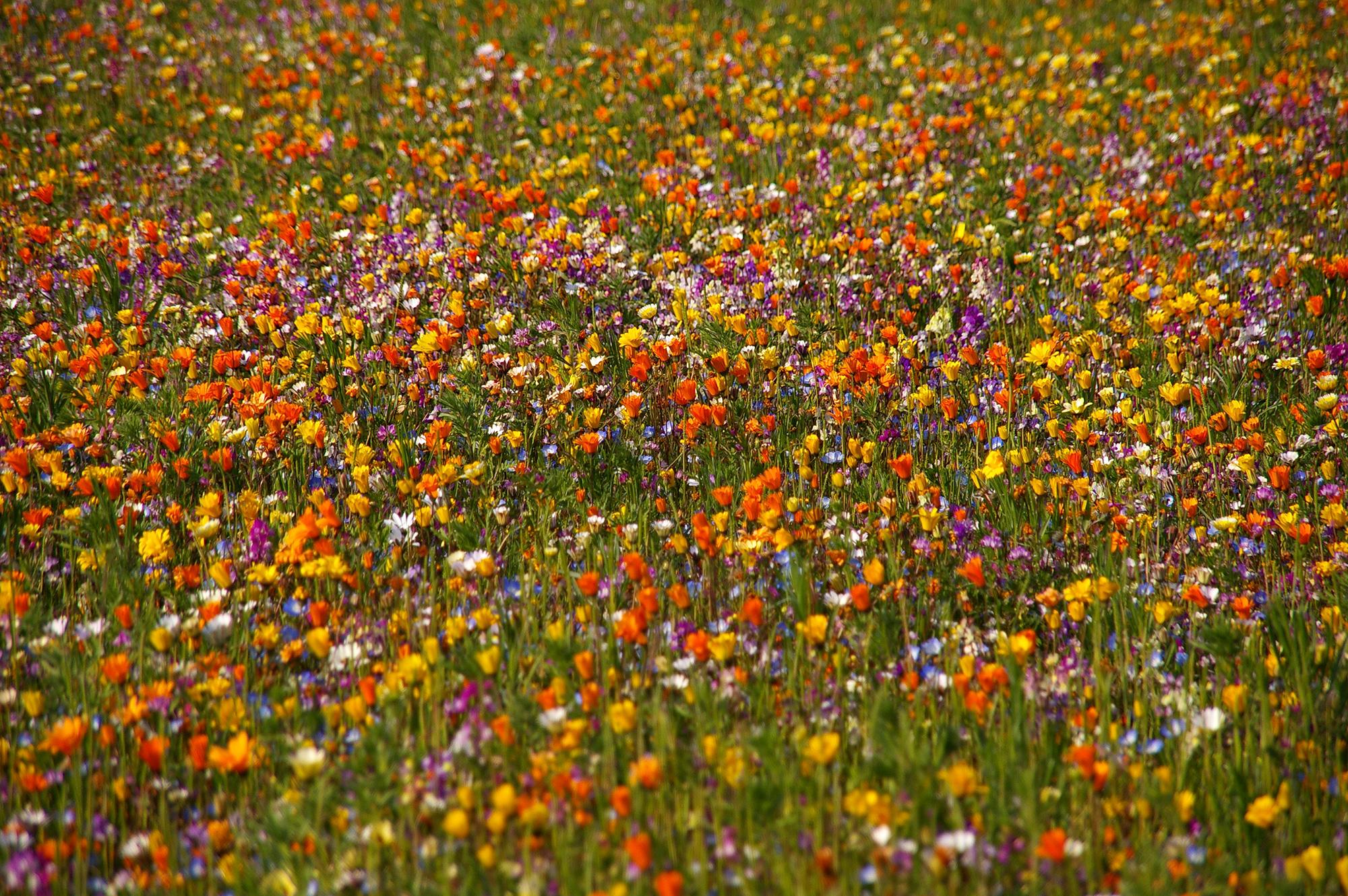 春に咲くカラフルなお花畑