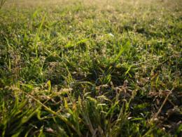 雑草のアップの写真のフリー素材