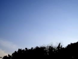 森のシルエットの写真のフリー素材