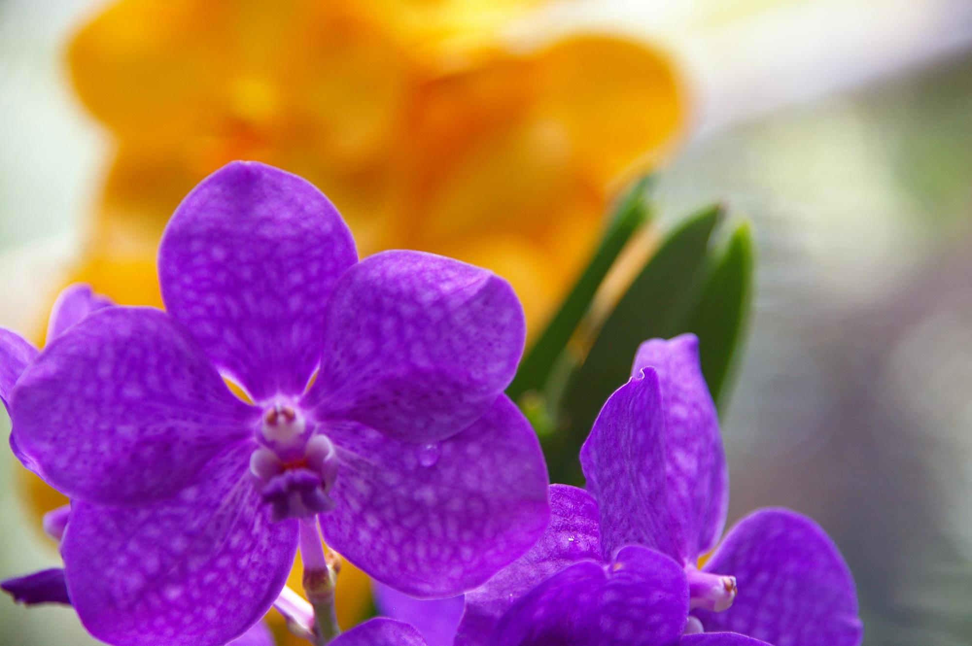 鮮やかな紫の花の写真のフリー素材