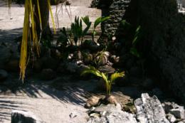 椰子の芽の写真のフリー素材