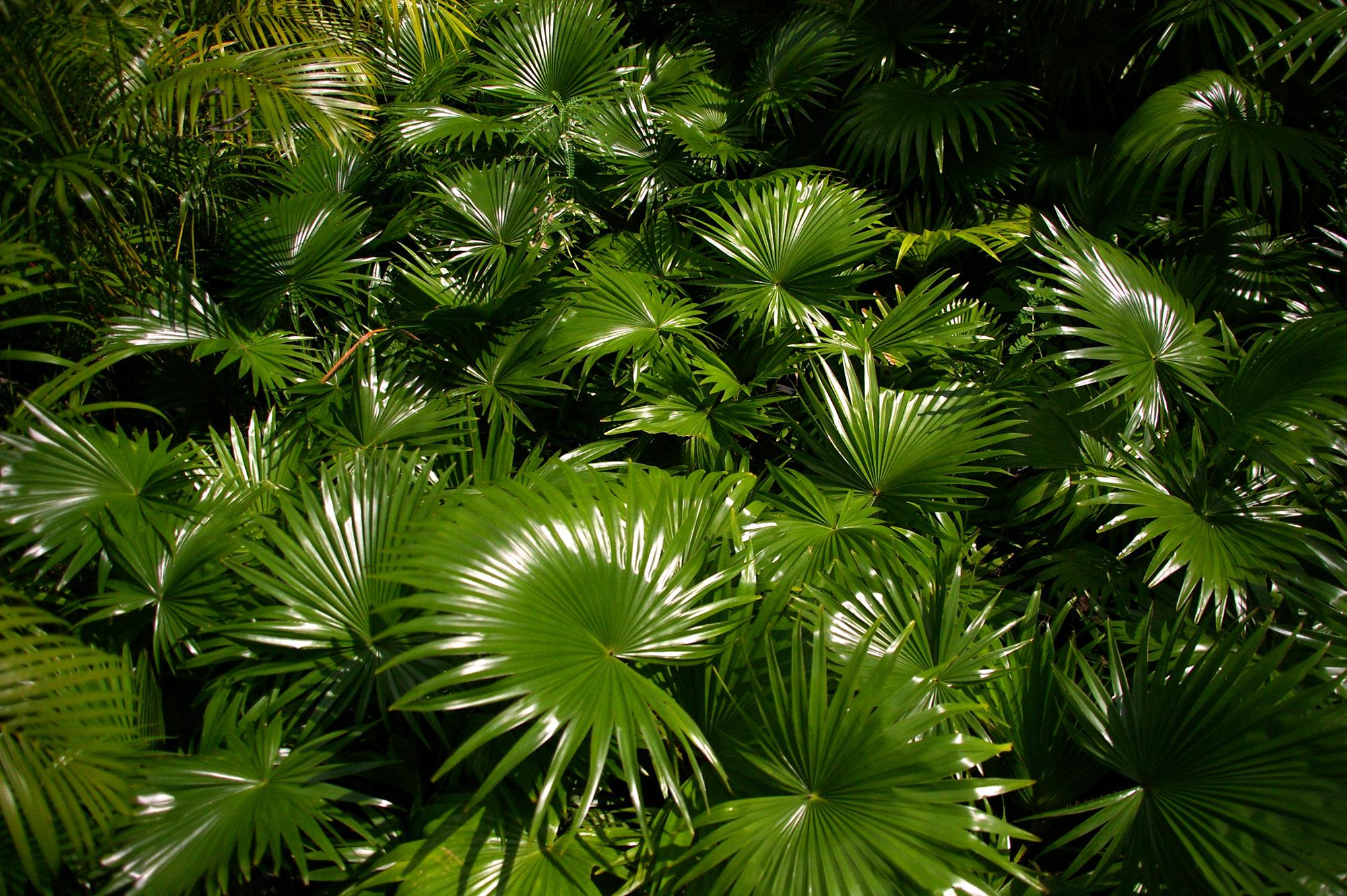 扇型の葉っぱの写真のフリー素材