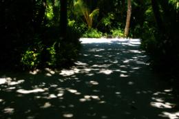 白い砂の道の木の影の写真のフリー素材