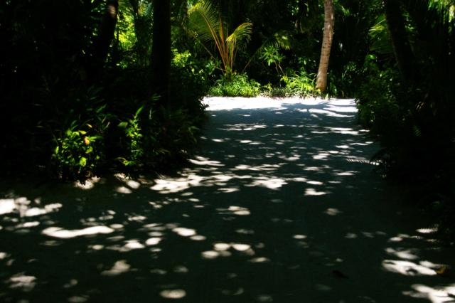 白い砂の道の木の影