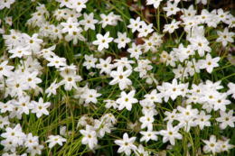 白い小さな花の写真のフリー素材