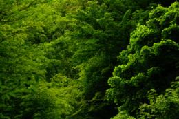 鮮やかな森の木々の緑