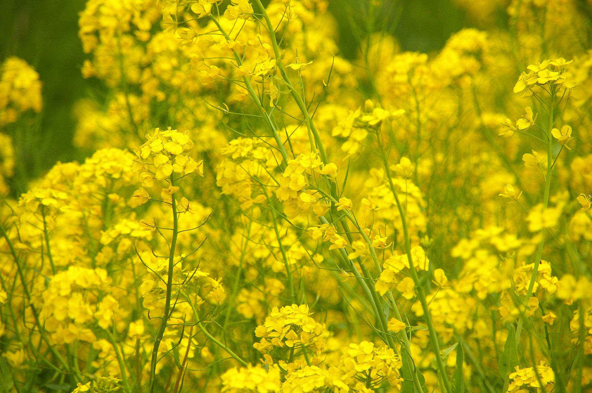 早春の花の無料写真素材