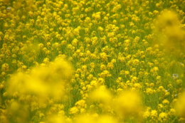 春の花の無料写真素材