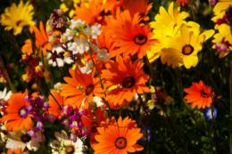 オレンジや黄色の鮮やかな花