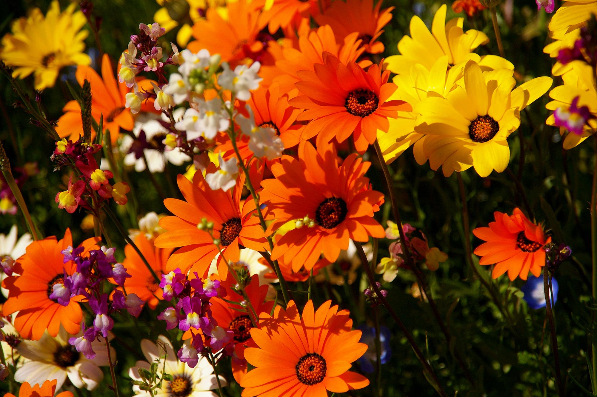 オレンジや黄色の鮮やかな花の写真のフリー素材