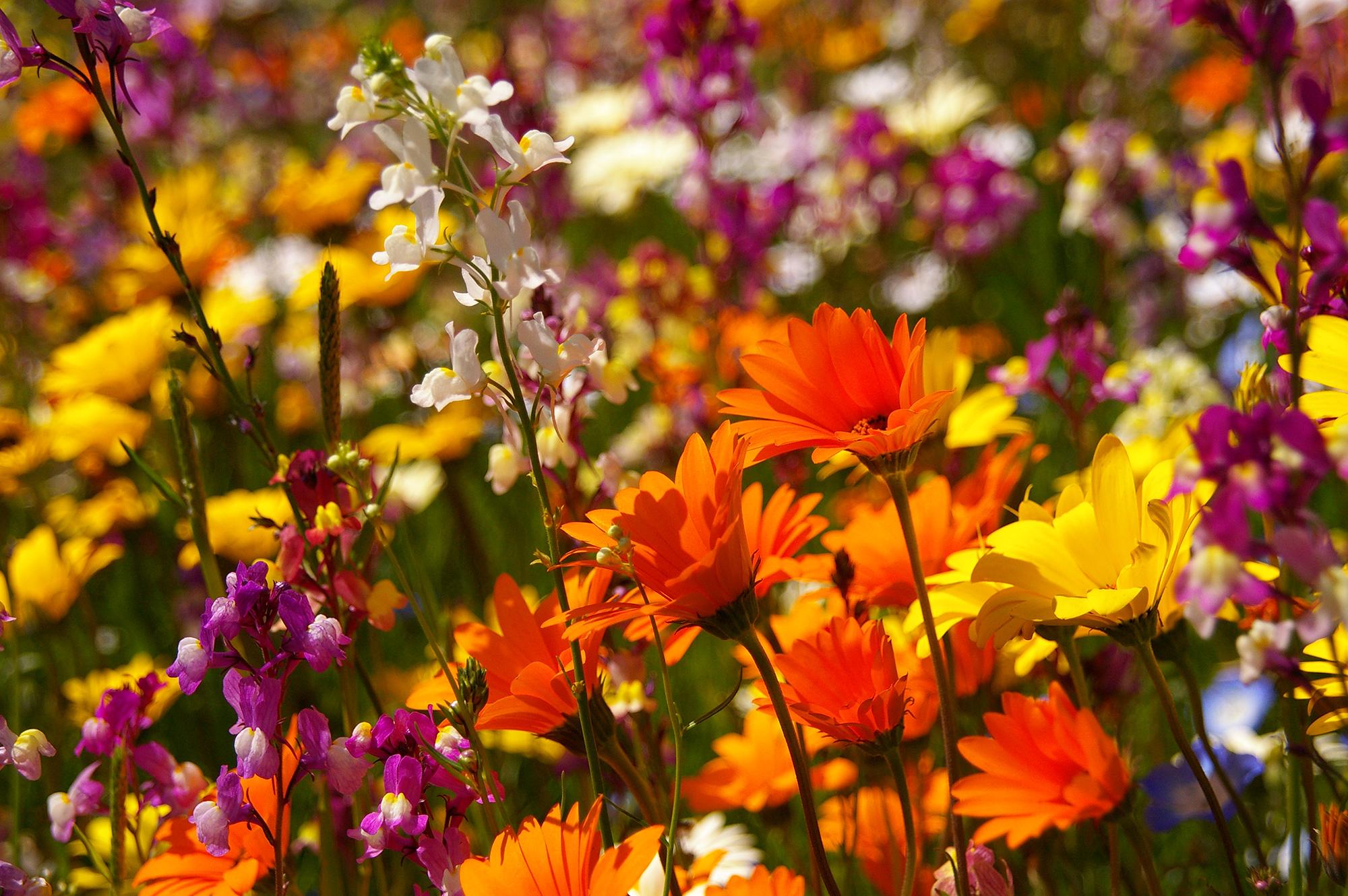 色彩豊かな花畑の写真のフリー素材