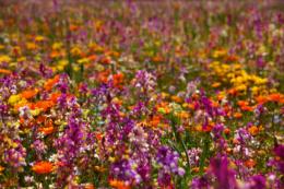 お花畑の写真のフリー素材