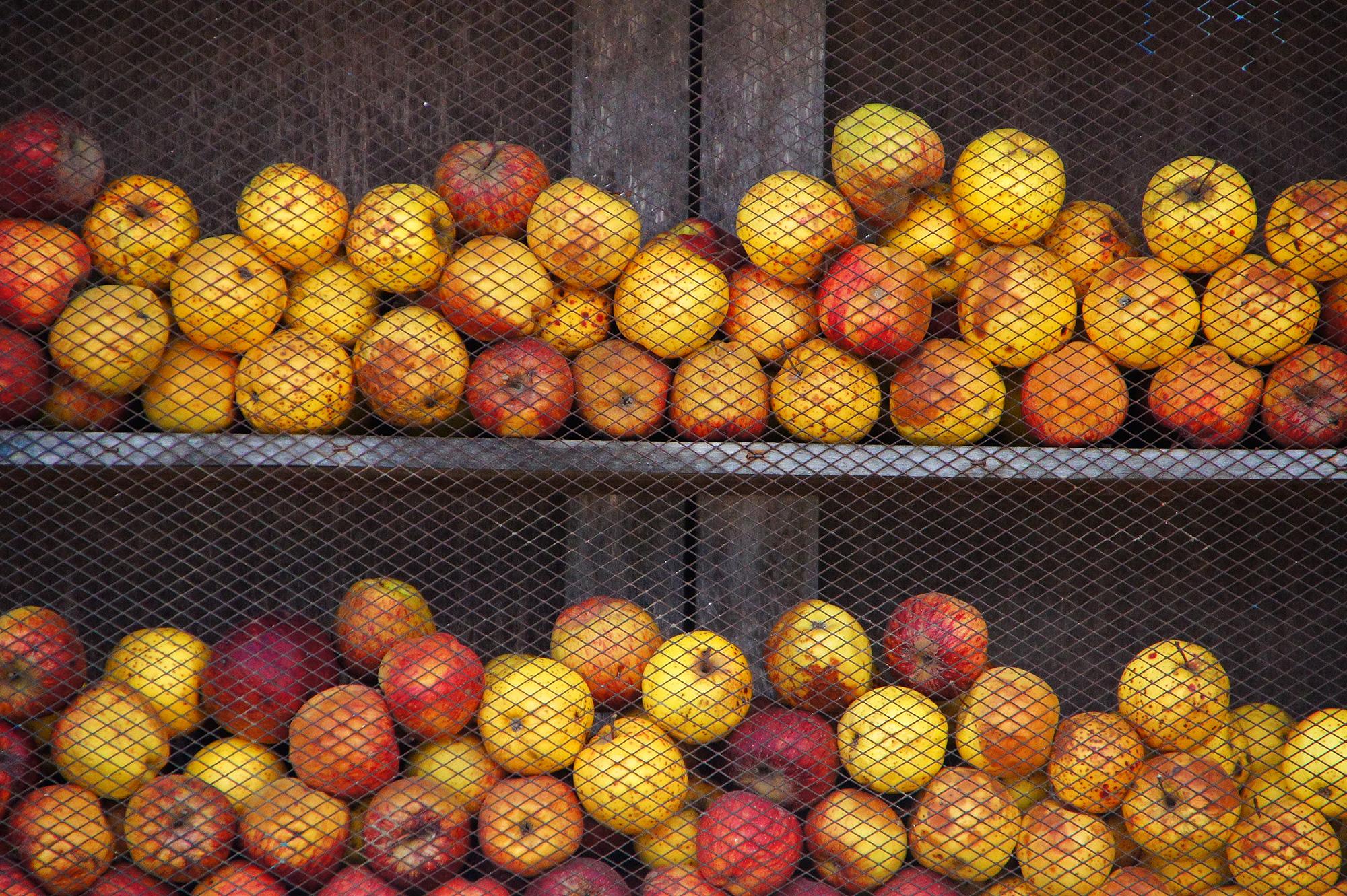 林檎のディスプレイの写真のフリー素材