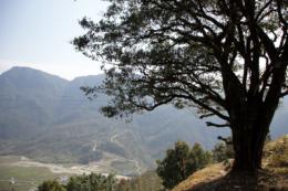 山の上の大木の写真のフリー素材
