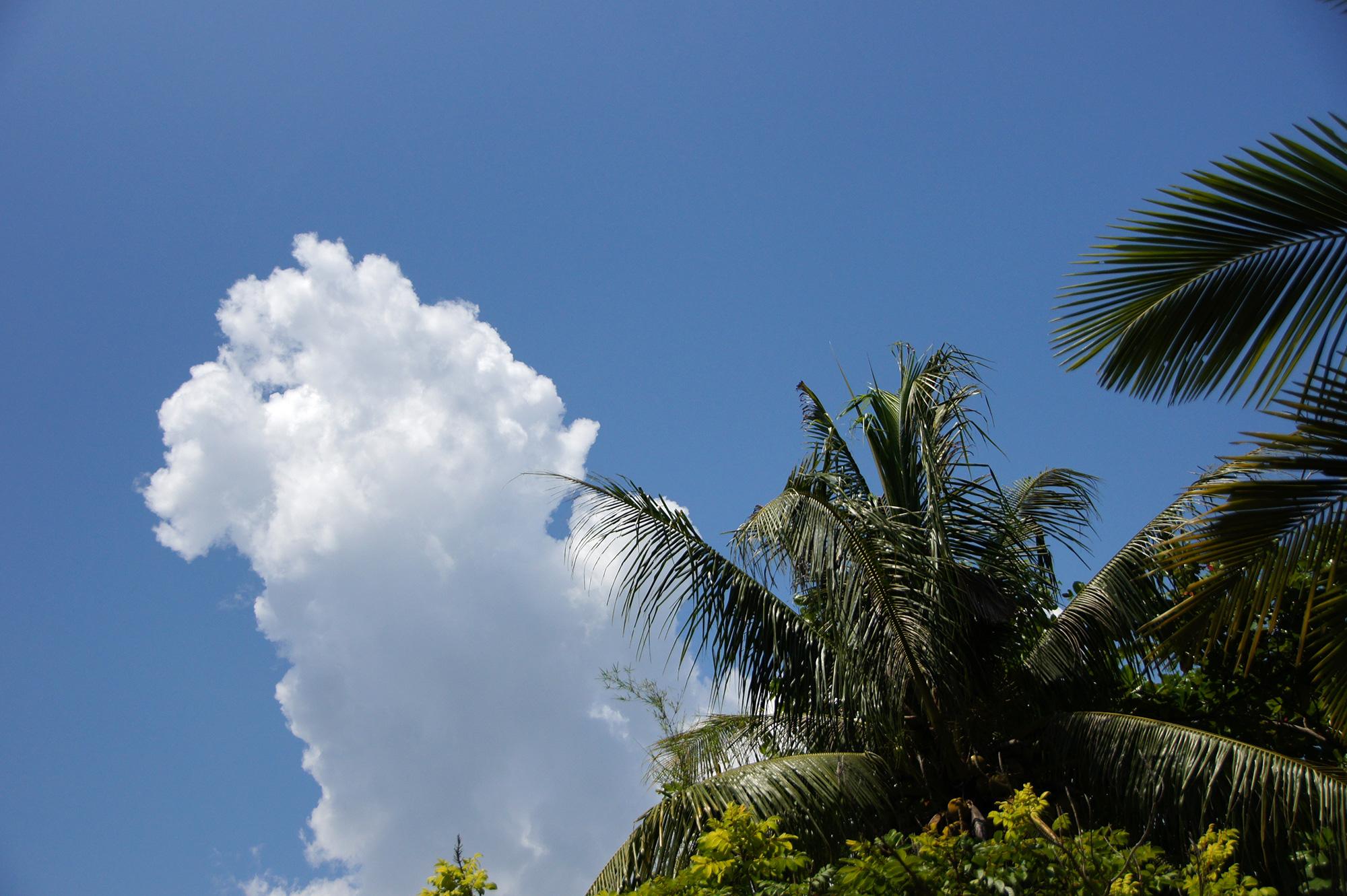 夏雲とヤシの木のフリー写真素材