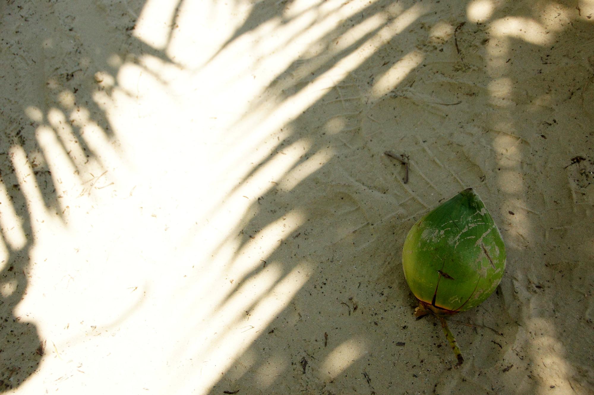 砂の上のヤシの実のフリー写真素材