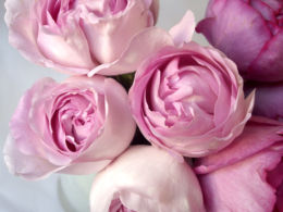薔薇の花束の写真のフリー素材