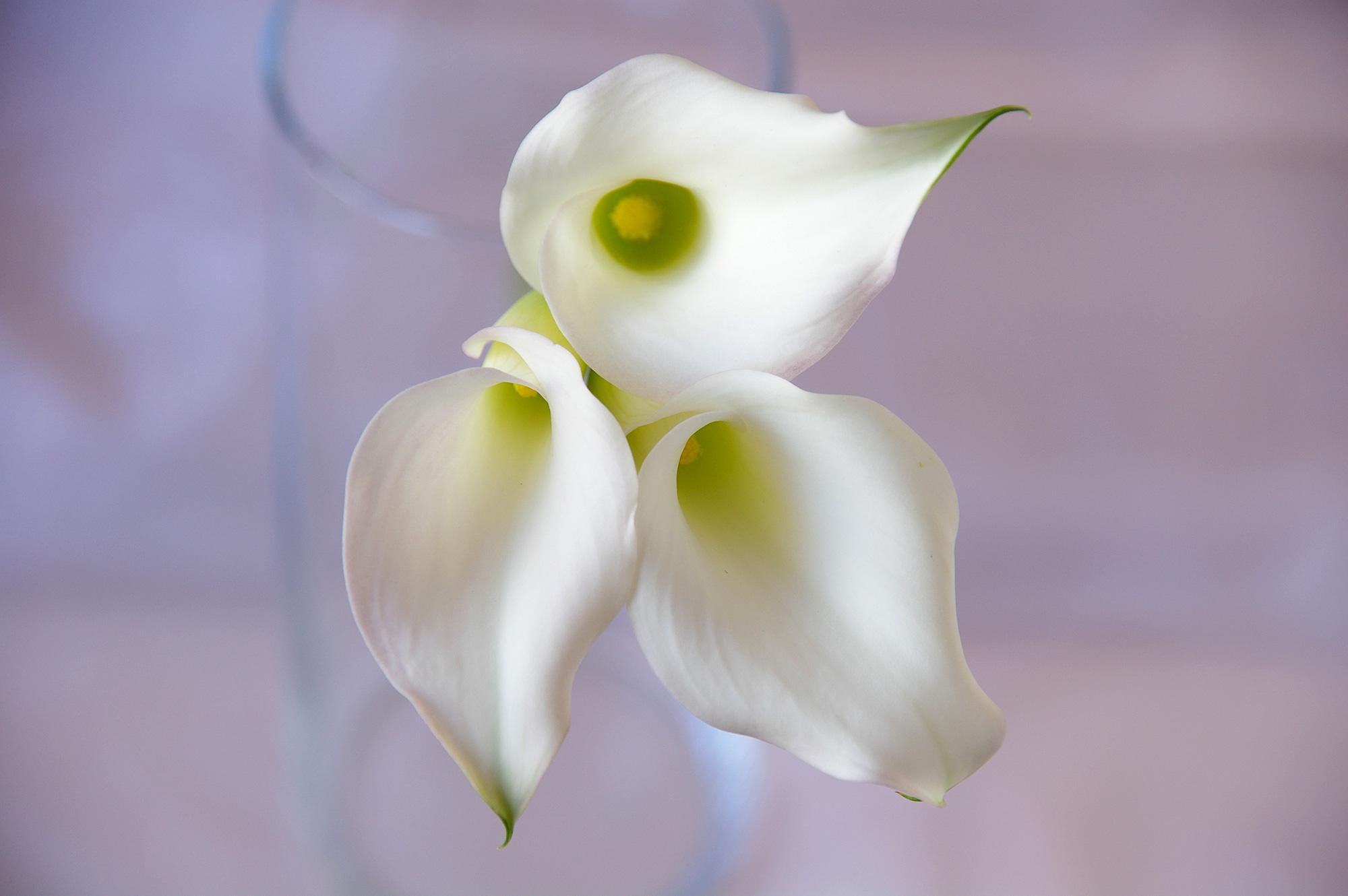 白いカラーの写真のフリー素材