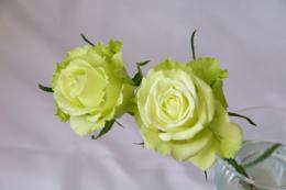 ライム薔薇のフリー写真素材