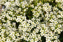 とても小さくて細かい花のフリー写真素材