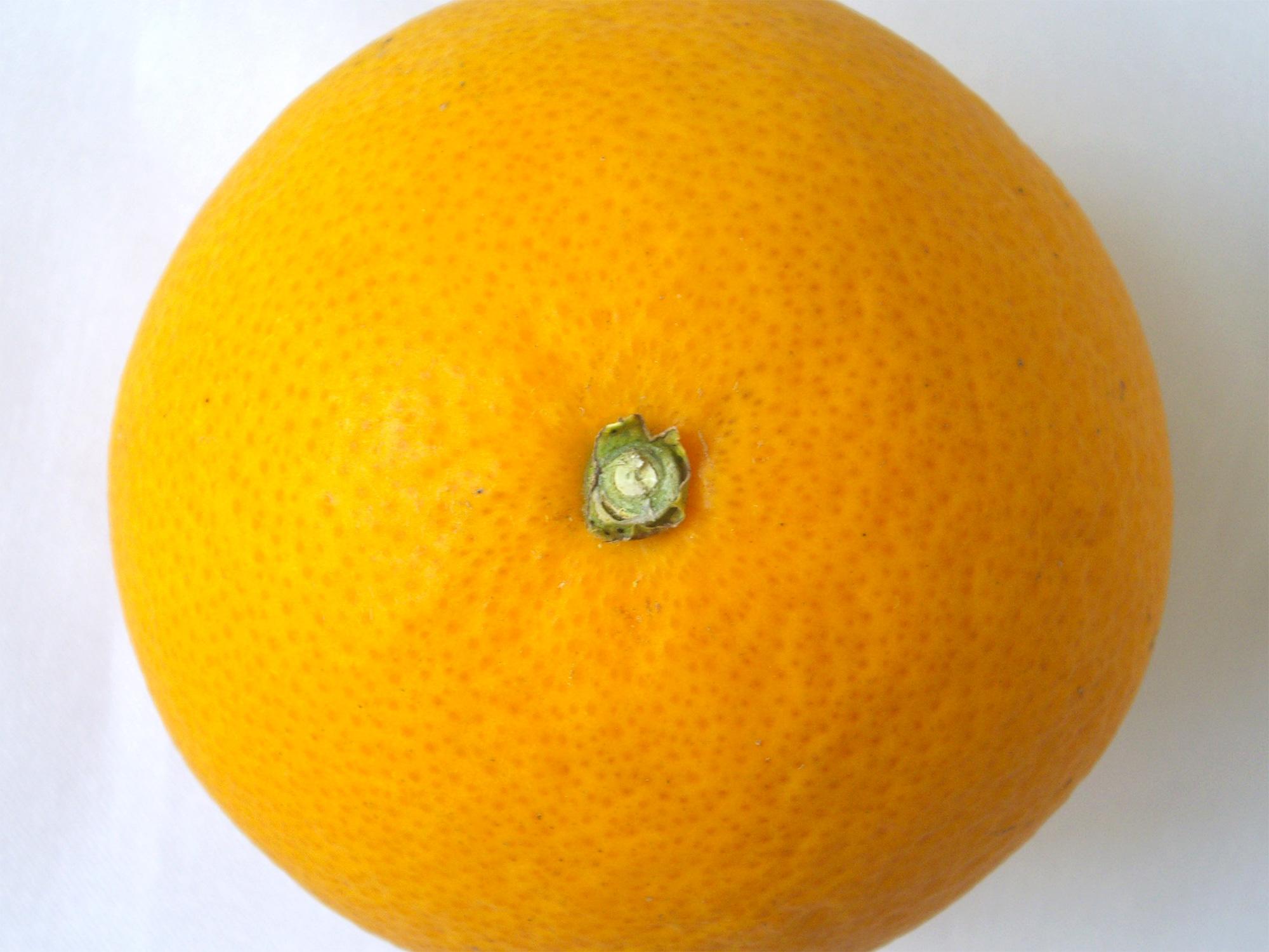 オレンジの写真のフリー素材