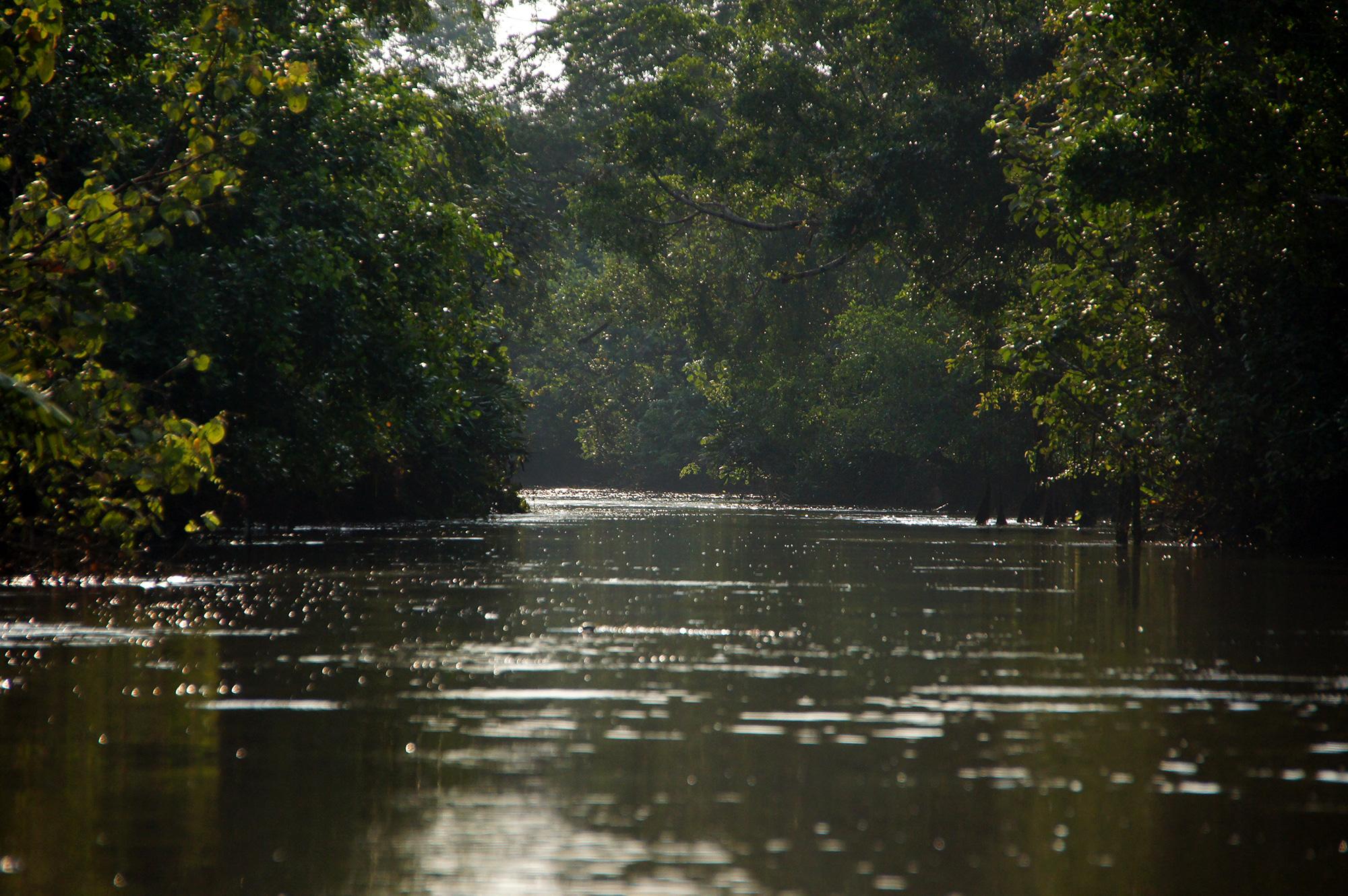 ジャングルの中の川のフリー写真素材