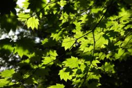 木漏れ日のフリー写真素材