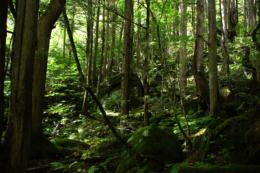 深い森の中の写真のフリー素材