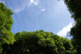 青空と森のフリー写真素材