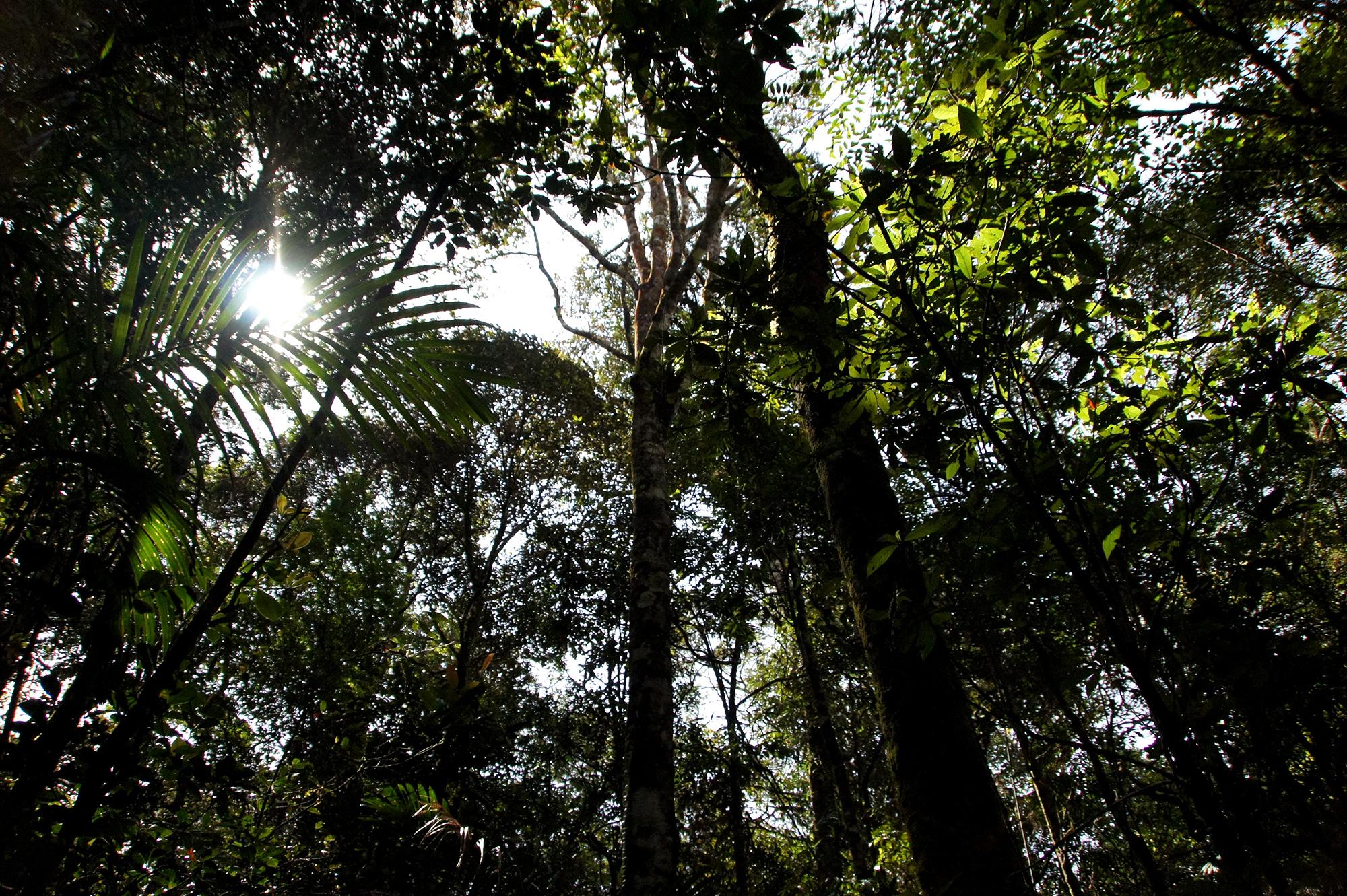 ジャングルのフリー写真素材