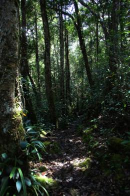 ジャングルの中の道のフリー写真素材