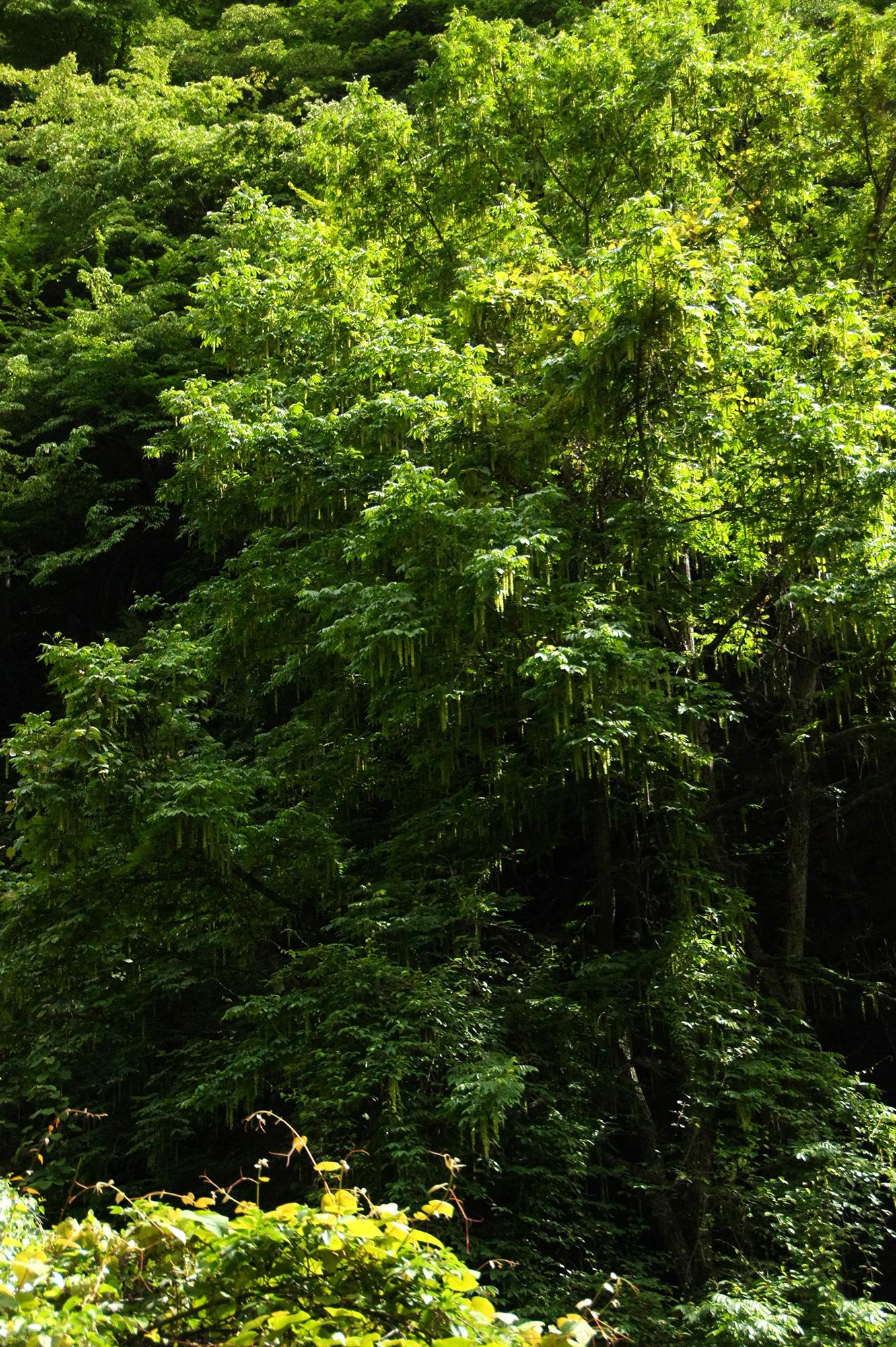 森の写真のフリー素材