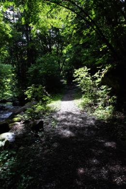 森の道のフリー写真素材