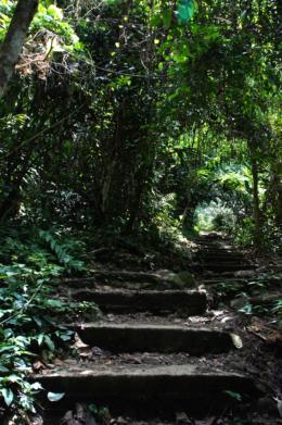 森の階段のフリー写真素材