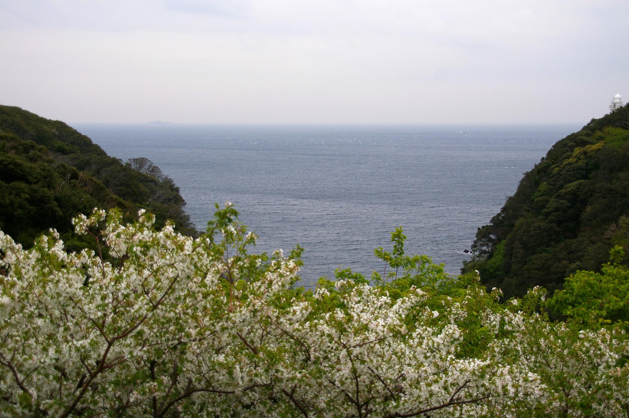 花が散った桜の木と海のフリー写真素材