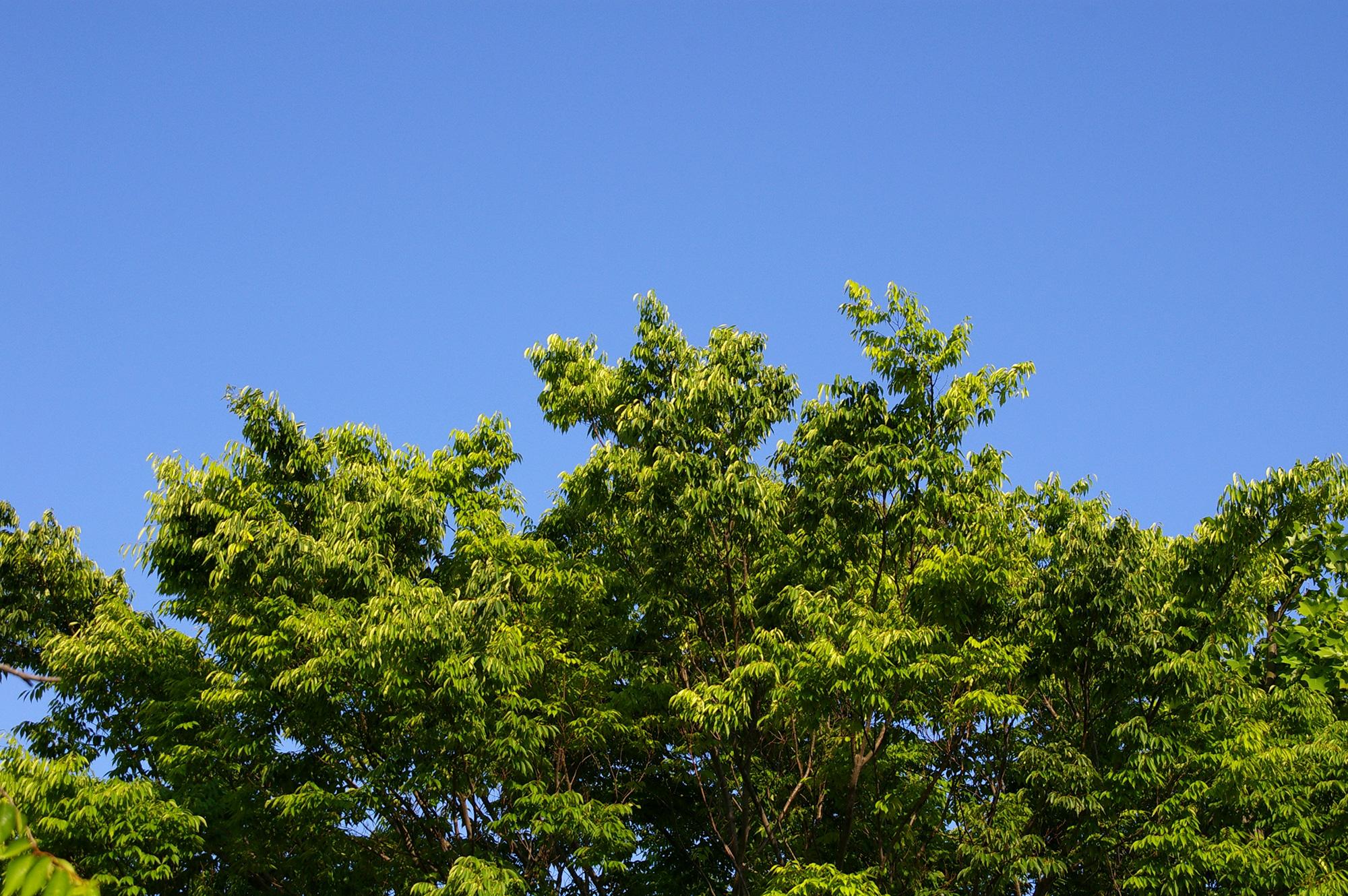 木々と青空のフリー写真素材