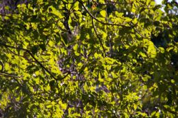 木の葉っぱの写真のフリー素材