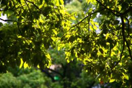 輝く葉っぱのフリー写真素材