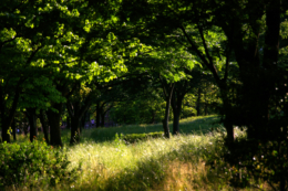 緑の公園のフリー写真素材