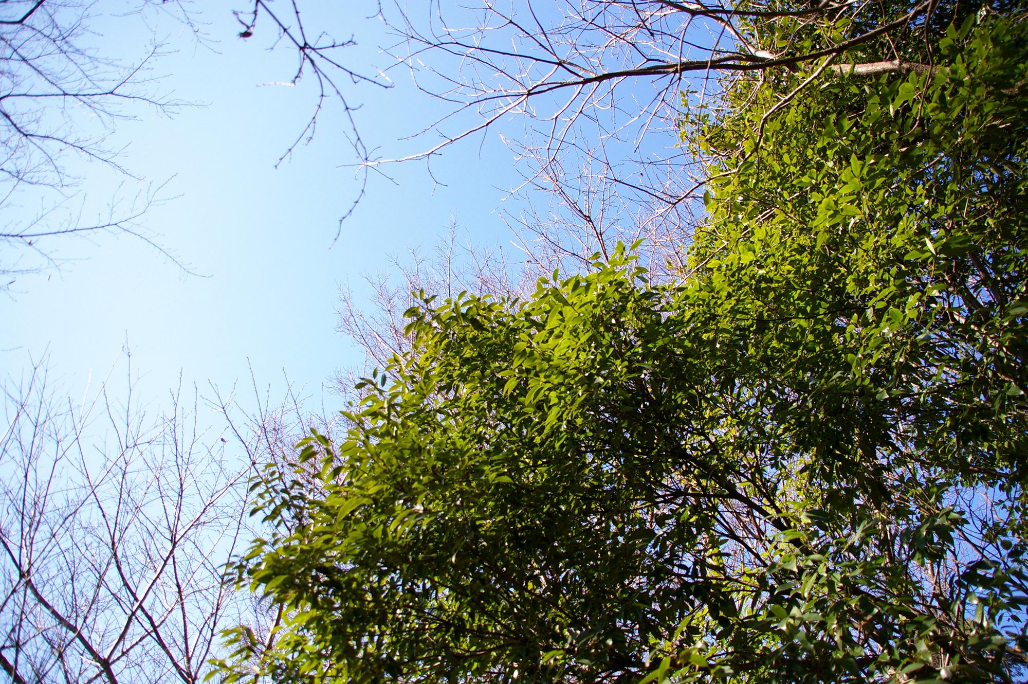 森の合間の青空のフリー素材